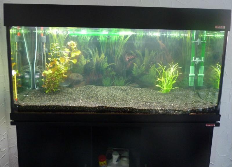 Aquarium Wave 190 L P1030910