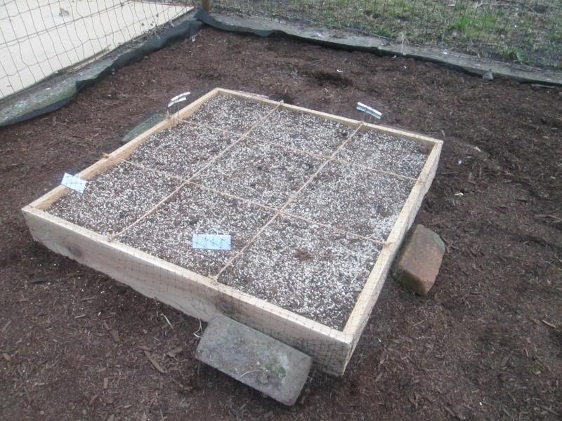 My Rusty Garden Img_0119