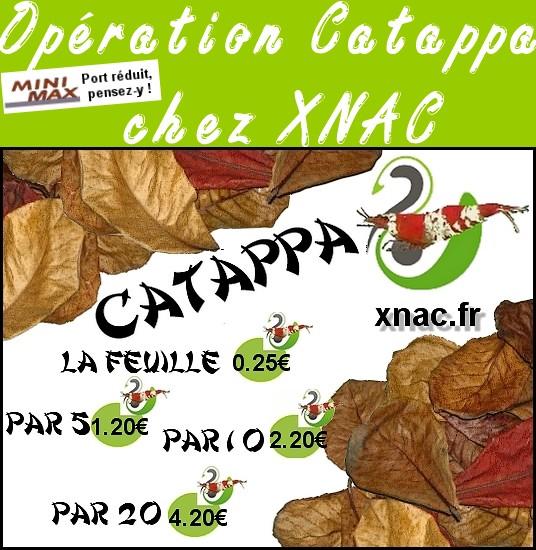 0pération Catappa chez XNAC Copie_10
