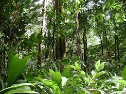 The North Amazon Rainforest The_no10