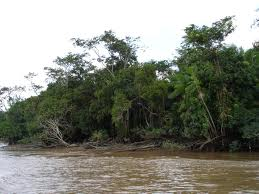 Purus River The_pu10