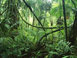 The South Amazon Rainforest The_so10