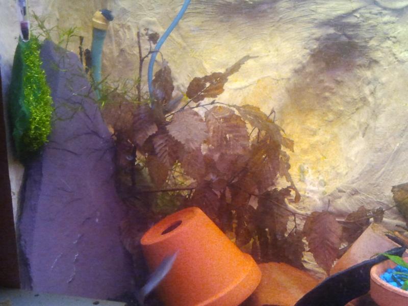 mon aquarium 20130310