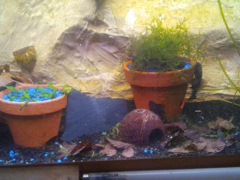 mon aquarium 20130311