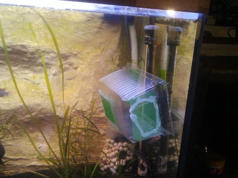 mon aquarium 20130312