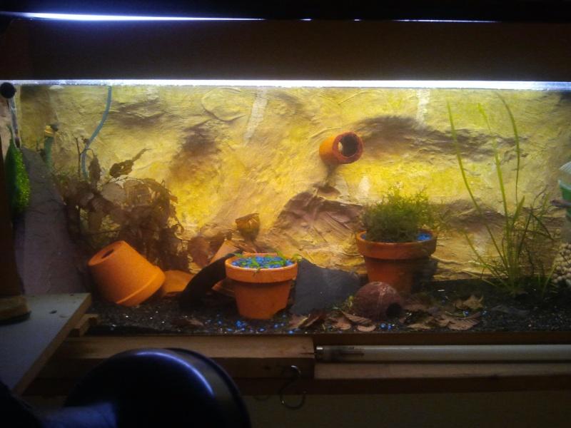 mon aquarium 20130313