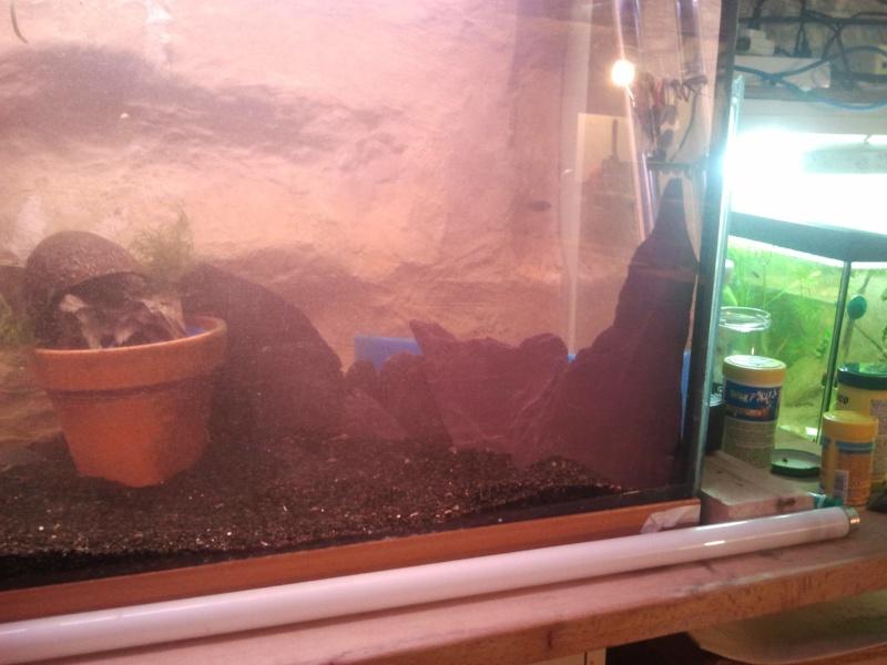 mon aquarium 20130315