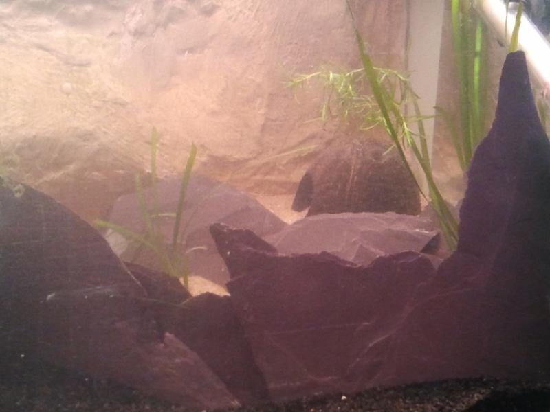 mon aquarium 20130320