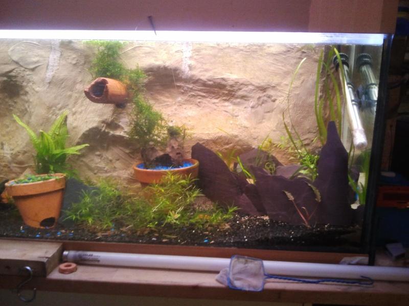 mon aquarium 20130410