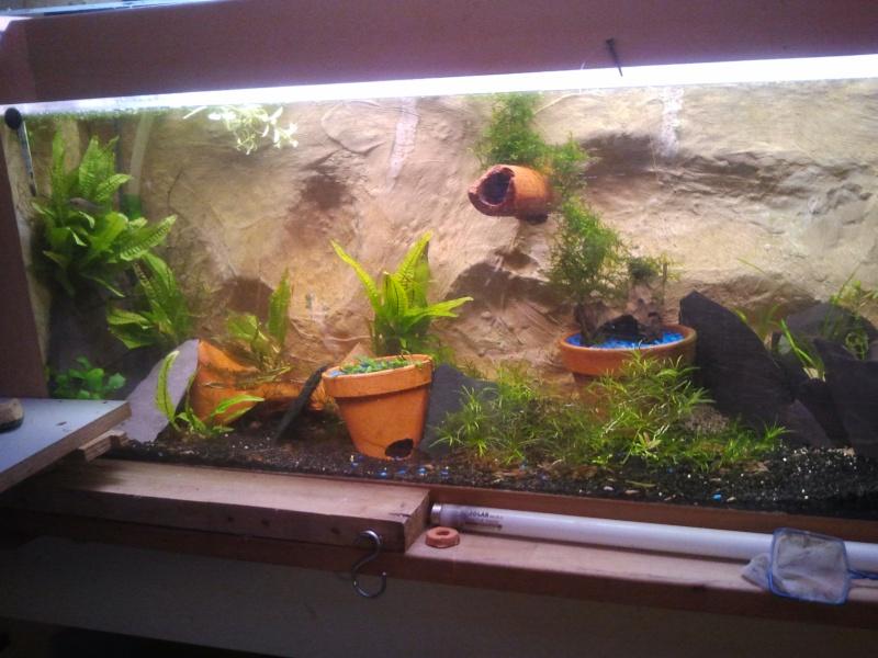 mon aquarium 20130412