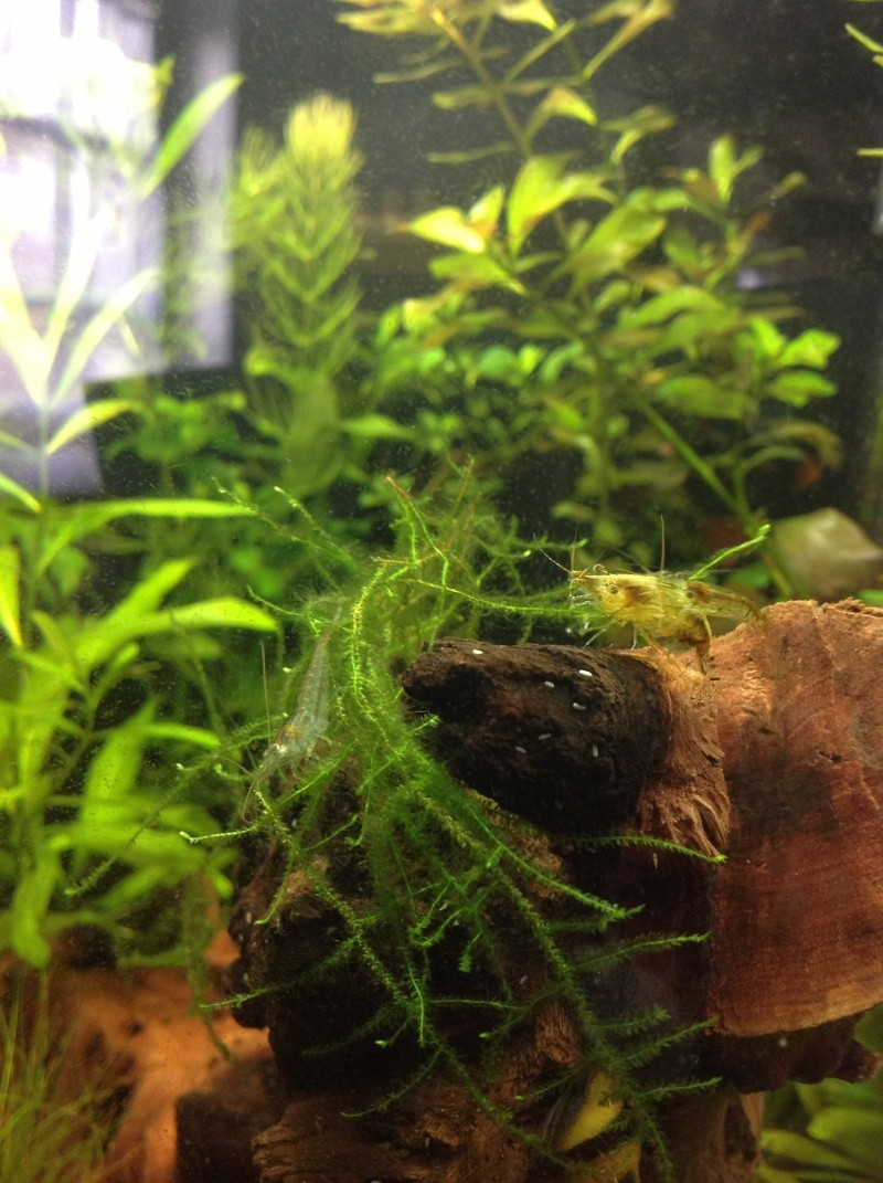 30L spe crevettes Img_0113