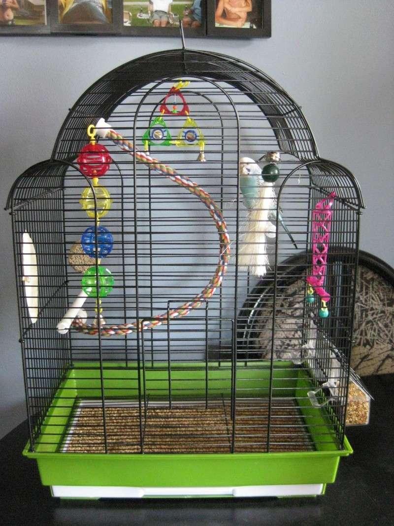 Sortie de la cage 06310