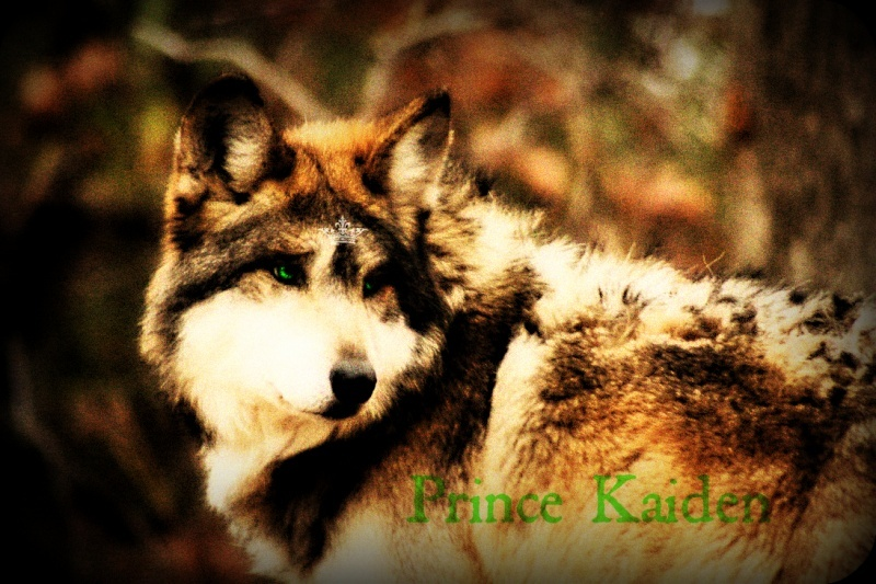 Kaiden | Runaway Monarch Kai110