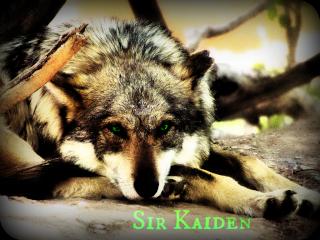 Kaiden | Runaway Monarch Kaiden10