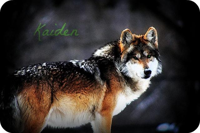 Kaiden | Runaway Monarch Prince10