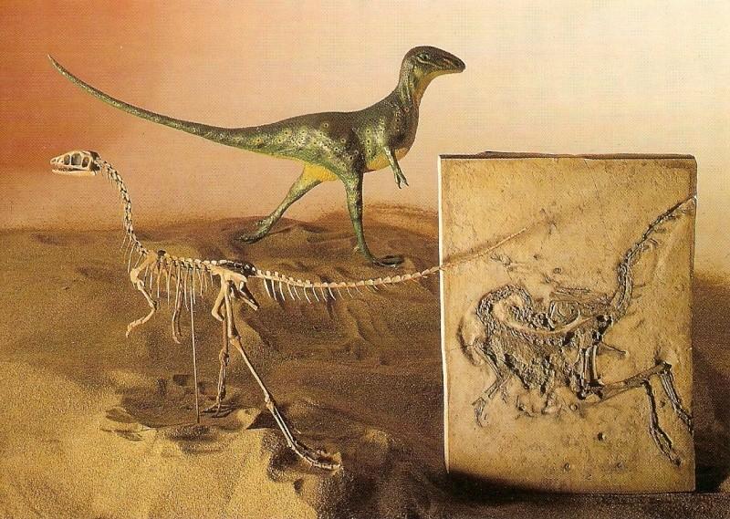 Paleophilatelie: Paläontologie und Philatelie  - Seite 2 Scan0011