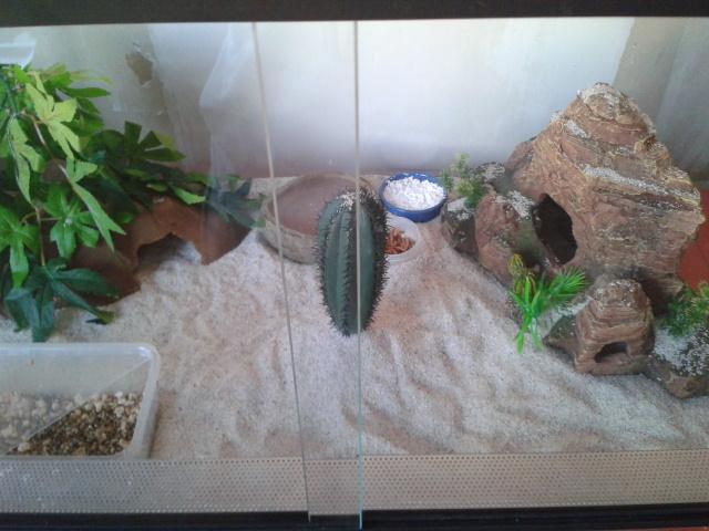 Gecko qui monte toukours sur les vitres 2013-018