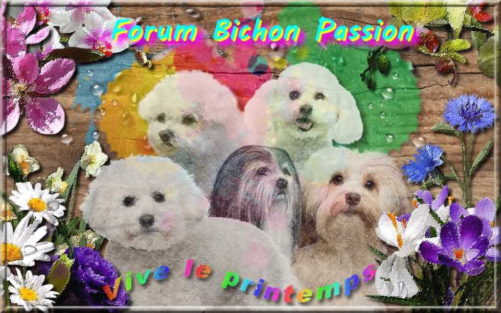 Forum Bichon Passion