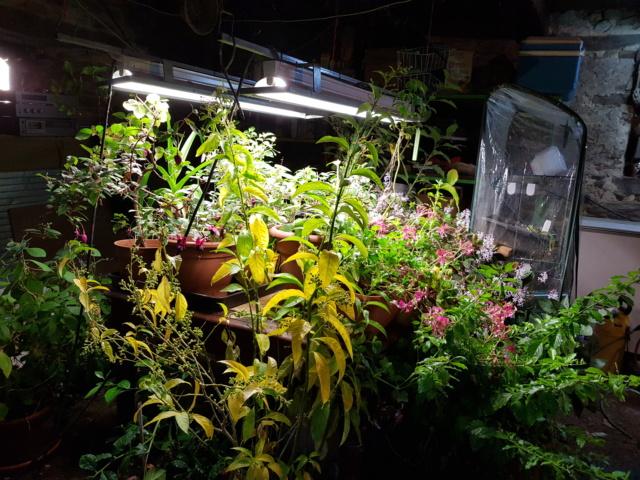 Hivernage des plantes  20181117