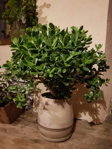 les plantes d'intérieur de vally 20201019