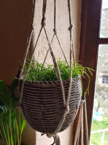 les plantes d'intérieur de vally 20201020