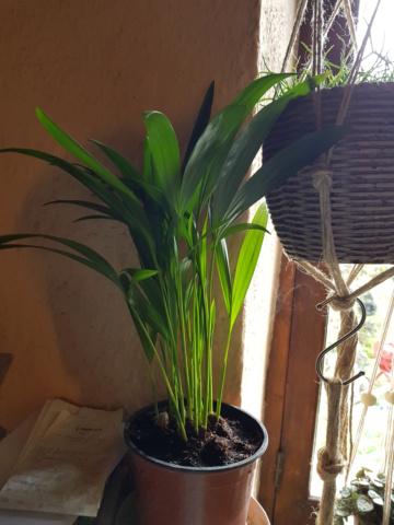 les plantes d'intérieur de vally 20201021