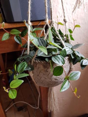 les plantes d'intérieur de vally 20201022