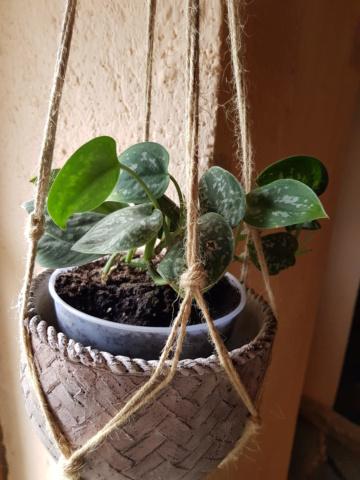 les plantes d'intérieur de vally 20201023