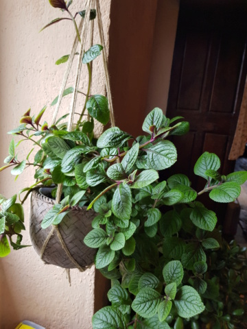 les plantes d'intérieur de vally 20201024