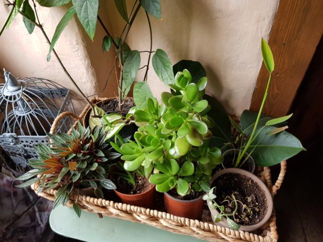 les plantes d'intérieur de vally 20201025