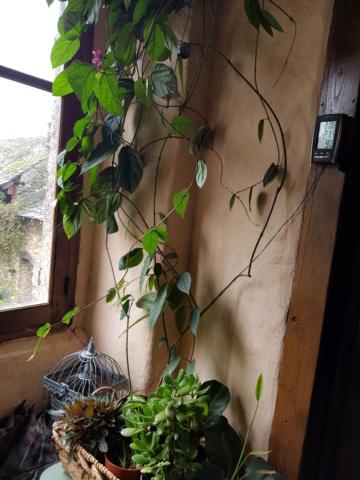 les plantes d'intérieur de vally 20201026