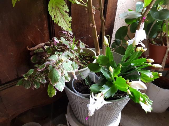 les plantes d'intérieur de vally 20201027