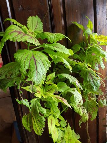 les plantes d'intérieur de vally 20201029