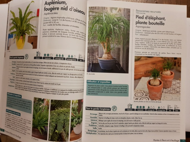 plantes d'intérieur de chez horticolor 20201111