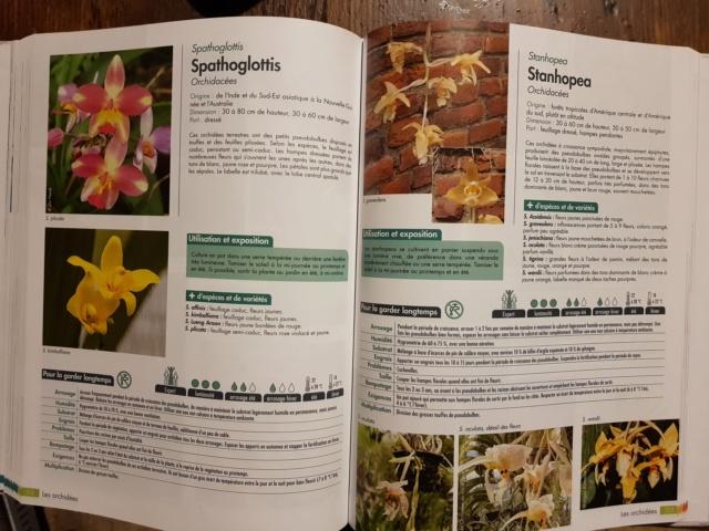 plantes d'intérieur de chez horticolor 20201112