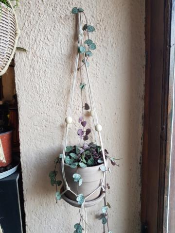 les plantes d'intérieur de vally 20201125