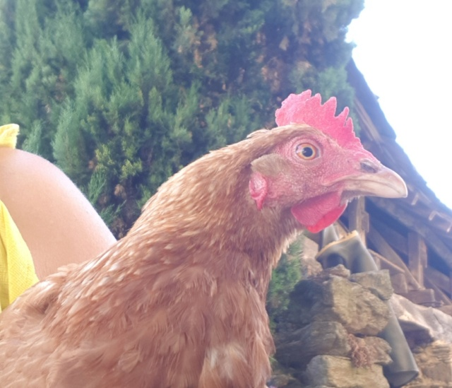 Carine, la poulette apprivoisée Resize15