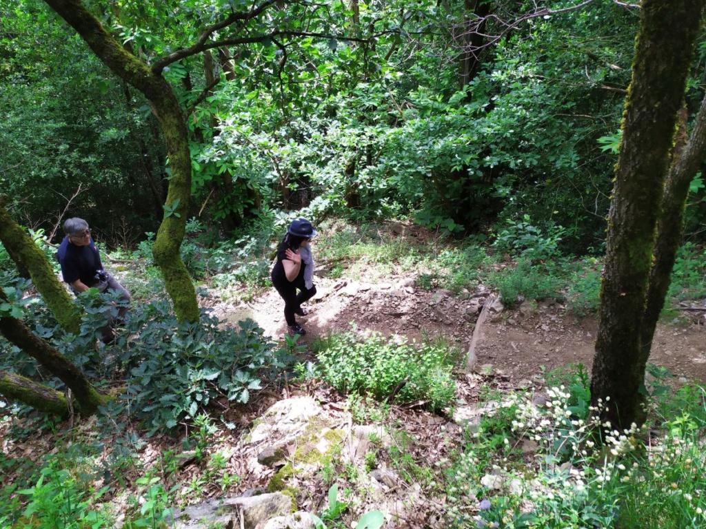Occitanie - Sortie : Passerelle de Mazamet et ville de Hautpoul le jeudi 21  Img_2018