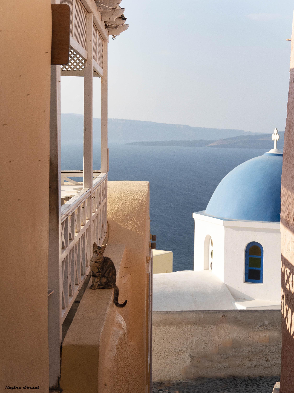 greek cat in santorini! C1810