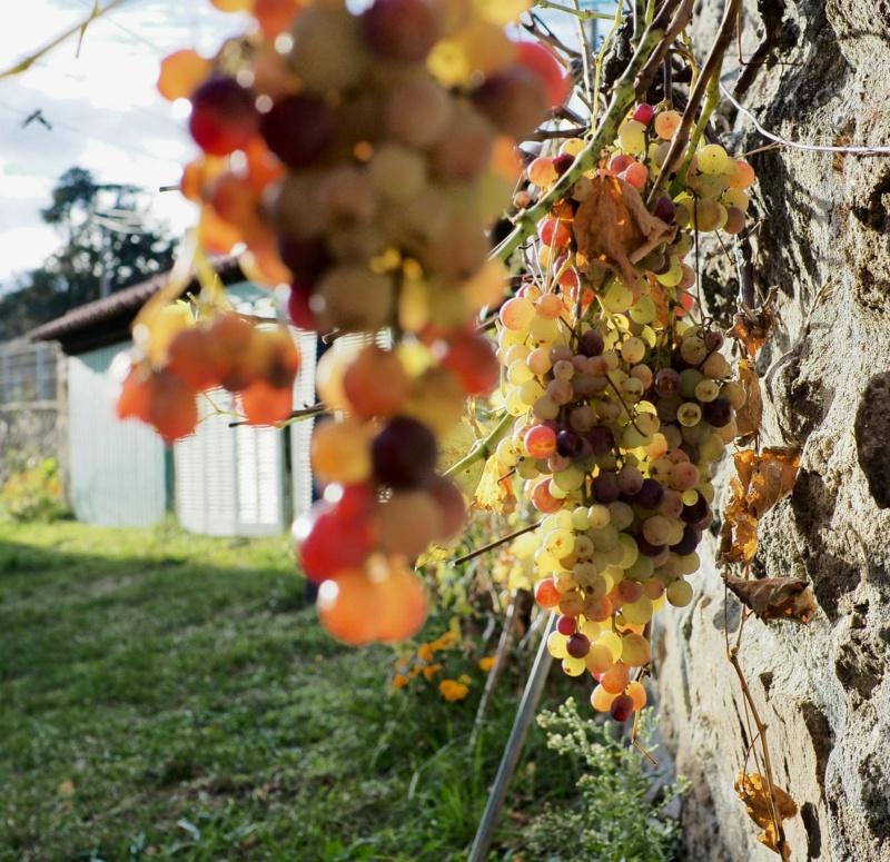Confinement 1 photo jour à partir du 1 novembre - (FIL OUVERT A TOUS) - Page 5 20112111