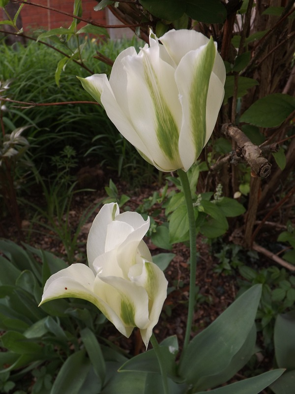 Brassées fleuries - Page 2 Dscf3419