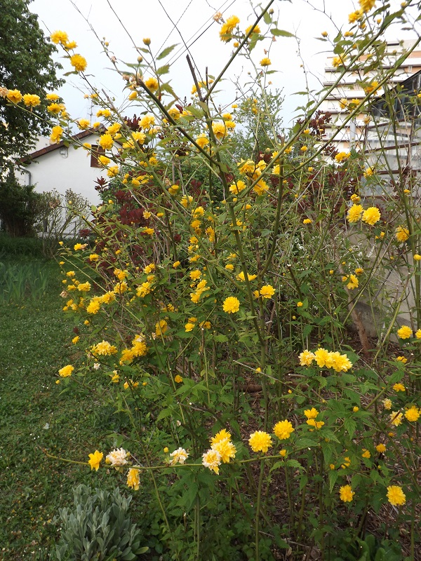 Brassées fleuries - Page 2 Dscf3420