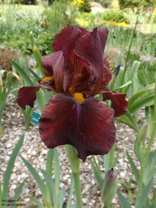 Les iris du Jardin Botanique de Mulhouse Dscf3622