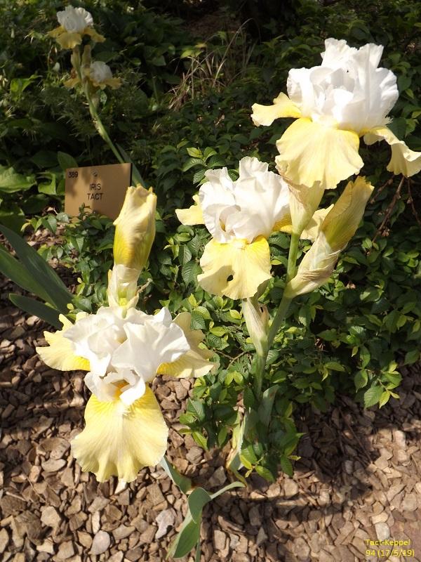 Les iris du Jardin Botanique de Mulhouse Dscf3628
