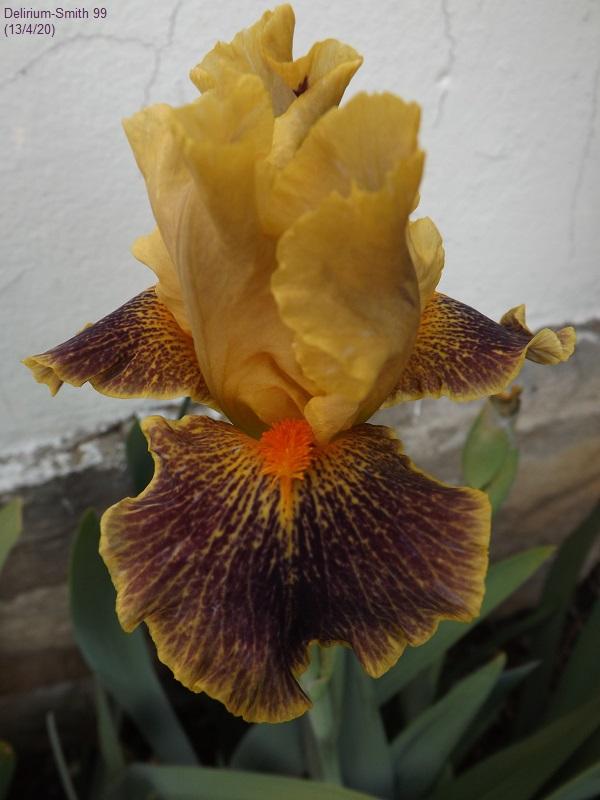 Une saison en iris (2020) Dscf4022