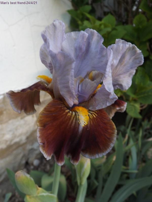 Une saison en iris (2021) Dscf4431