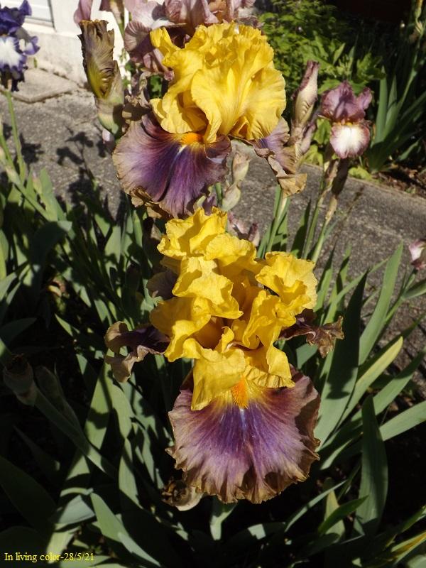 Iris 'In Living Color' - Paul Black 2003 Dscf4712