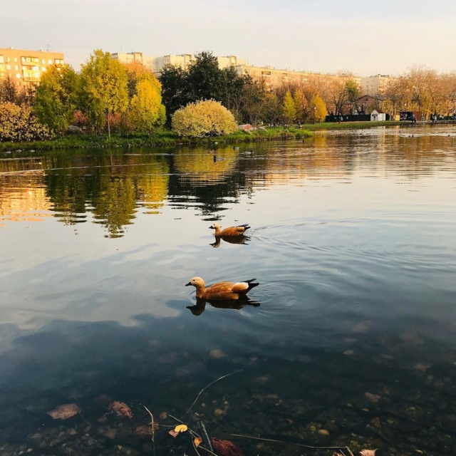 """Природа у ЖК """"Летний сад"""" - Страница 6 Jpjpd810"""