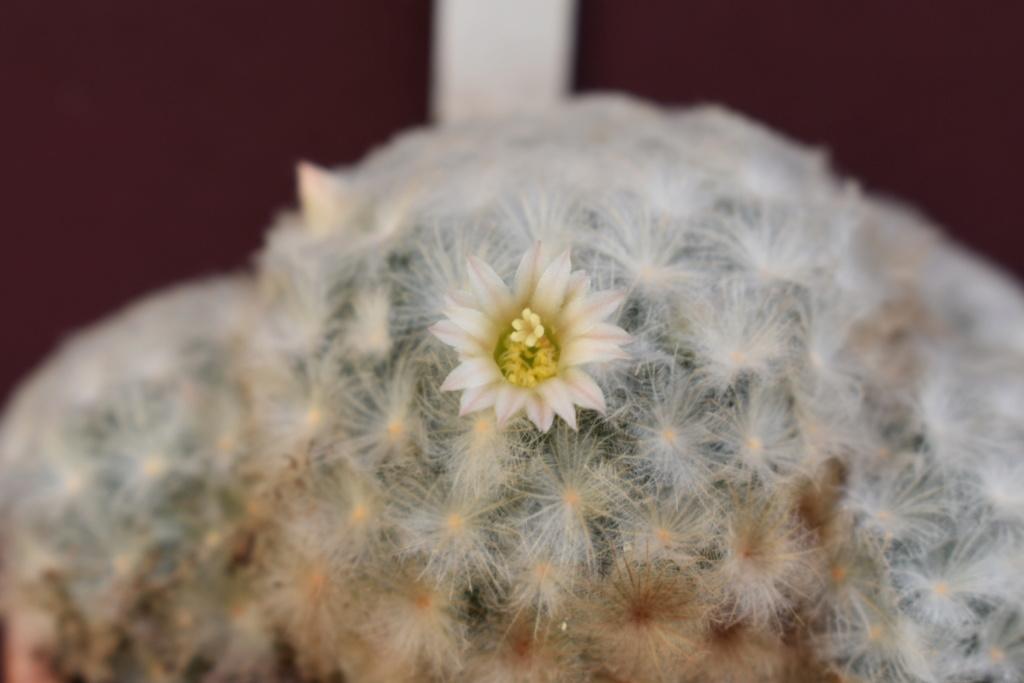 Forumactif.com : Forum Plantes en Pagaille. - Portail Dsc_0110