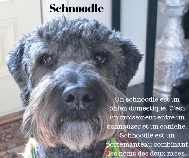 Le Schnoodle Un_sch11